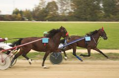 Horse race. In slovenian small town Stock Images