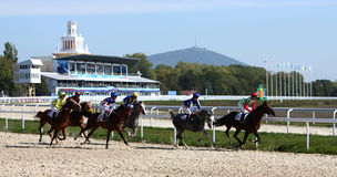 Horse race. Royalty Free Stock Image