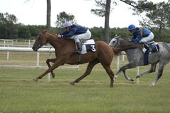 Horse race. Horse racing sport Stock Images