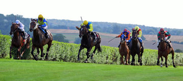 Horse Race 2013b Stock Images