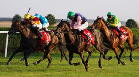 Horse Race 2013a Royalty Free Stock Photos