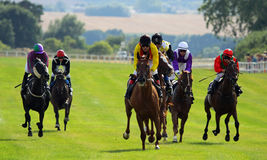 Horse Race 2013d Royalty Free Stock Photo