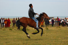 Horse race. An entensive horse race taking place on the lake side of Qinghai lake in China's Qinghai province, vast and spectacular landscape royalty free stock image