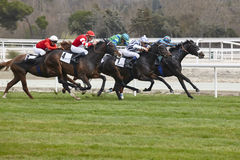 Horse race final rush. Competition sport. Hippodrome. Winner. Sp Royalty Free Stock Image