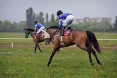 Horse race. Finish. Thoroughbred horse racing horses Royalty Free Stock Photos