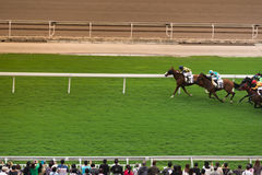 Horse Race in front of them public royalty free stock images