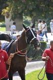 Horse Race Stock Image