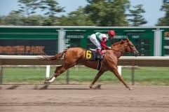 Horse race at Momouth Park royalty free stock image
