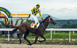 Horse race for the prize Oaks. Pyatigorsk, Russia - July 03:Horse race for the traditional prize Oaks in Pyatigorsk,the largest in Russia.Islam Pshukov crosses Stock Photography