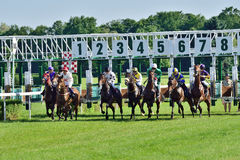 Horse race for the prize of the President of the City of Wroclaw on Juni 8, 2014. Stock Photos