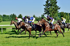 Horse race for the prize of the President of the City of Wroclaw on Juni 8, 2014. Royalty Free Stock Photos