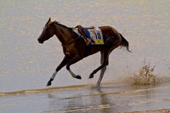 Horse race on Sanlucar of Barrameda Royalty Free Stock Images