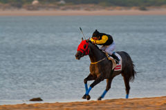 Horse race on Sanlucar of Barrameda, Spain, August  2008 Stock Photo