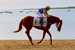 Horse race on Sanlucar of Barrameda, Spain, August  2011 Stock Photography