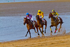 Horse race on Sanlucar of Barrameda, Spain, August  2011 Stock Photography