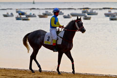 Horse race on Sanlucar of Barrameda, Spain, August  2011 Stock Images