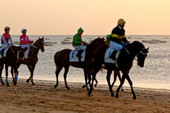 Horse race on Sanlucar of Barrameda, Spain, August  2011 Royalty Free Stock Photo
