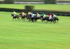 Horse race sprint. Final rush for the victory in a horse race with panning effect Royalty Free Stock Images