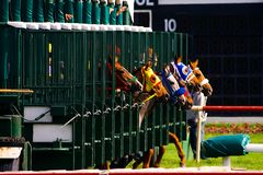 Horse Race Start royalty free stock images