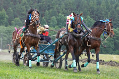 Horse race. Three horses in harness royalty free stock photos