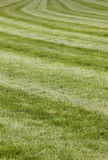 Horse race track with curve line. Vertical format royalty free stock photo