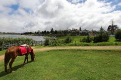 Horse on the racecourse of Nuwara Eliya in Sri Lanka. A Horse on the racecourse of Nuwara Eliya in Sri Lanka Stock Images
