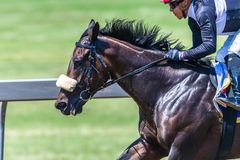 Horse Racing Jockey Closeup Speed Motion
