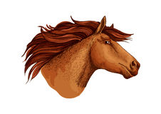 Horse racer mustang head vector sketch symbol Royalty Free Stock Photography