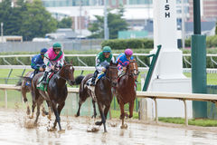 Horse races at Churchill Downs. Louisville, KY – June 18: Stephen Foster Day at Churchill Downs horse race track June 18, 2011 in Louisville, KY. Finish of The Royalty Free Stock Photography