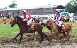 Horse races Stock Image