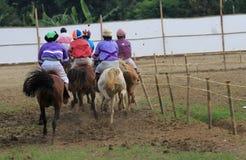 Horse races Stock Photos
