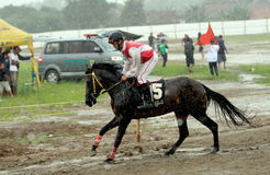 Horse races Royalty Free Stock Photography