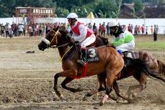 Horse races Royalty Free Stock Photo