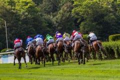 Horse racetrack Stock Image