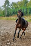 Horse  on the racetrack . Horse harness rides on the racetrack Stock Photos