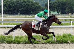 Horse racimg in Pyatigorsk. Royalty Free Stock Photography