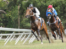 Horse racing. On the Island of Barbados, West Indies Royalty Free Stock Photos