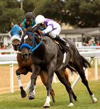 Horse racing. In Barbados Stock Image
