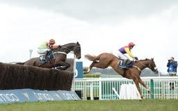 Free Horse Racing Stock Photos - 113736813