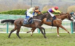 Free Horse Racing Stock Photos - 113736863