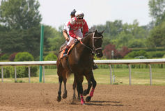 Horse Racing. Horse and Jockey warming up before the race Royalty Free Stock Images