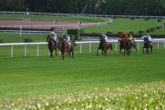 Horse racing. Final straight of the horse-race Stock Image