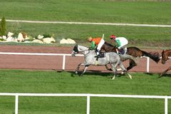 Horse racing. Horse-race the grey horse is at the head of the horse-race Stock Images