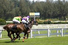 Horse Racing. At a turf club Stock Photos