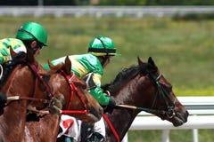 Horse racing. Stock Photos