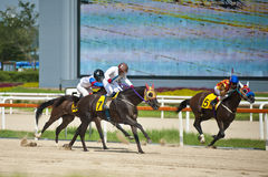 Horse racing. Korean racecourse horse racing scene Royalty Free Stock Photo