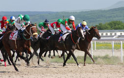 Horse racing. PYATIGORSK, RUSSIA - JUNE 5: Unidentified riders and their horses compete for the The race for the prize of the Afins Wuda on June 5, 2011 in Royalty Free Stock Photos