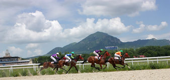 Horse racing. Royalty Free Stock Photo