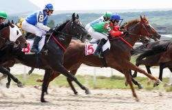 Horse racing. Royalty Free Stock Photo