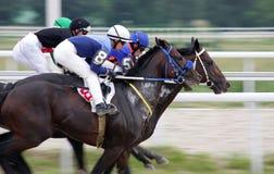 Horse racing. Stock Photo